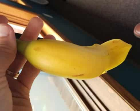 We've Never Seen THIS On A Banana?