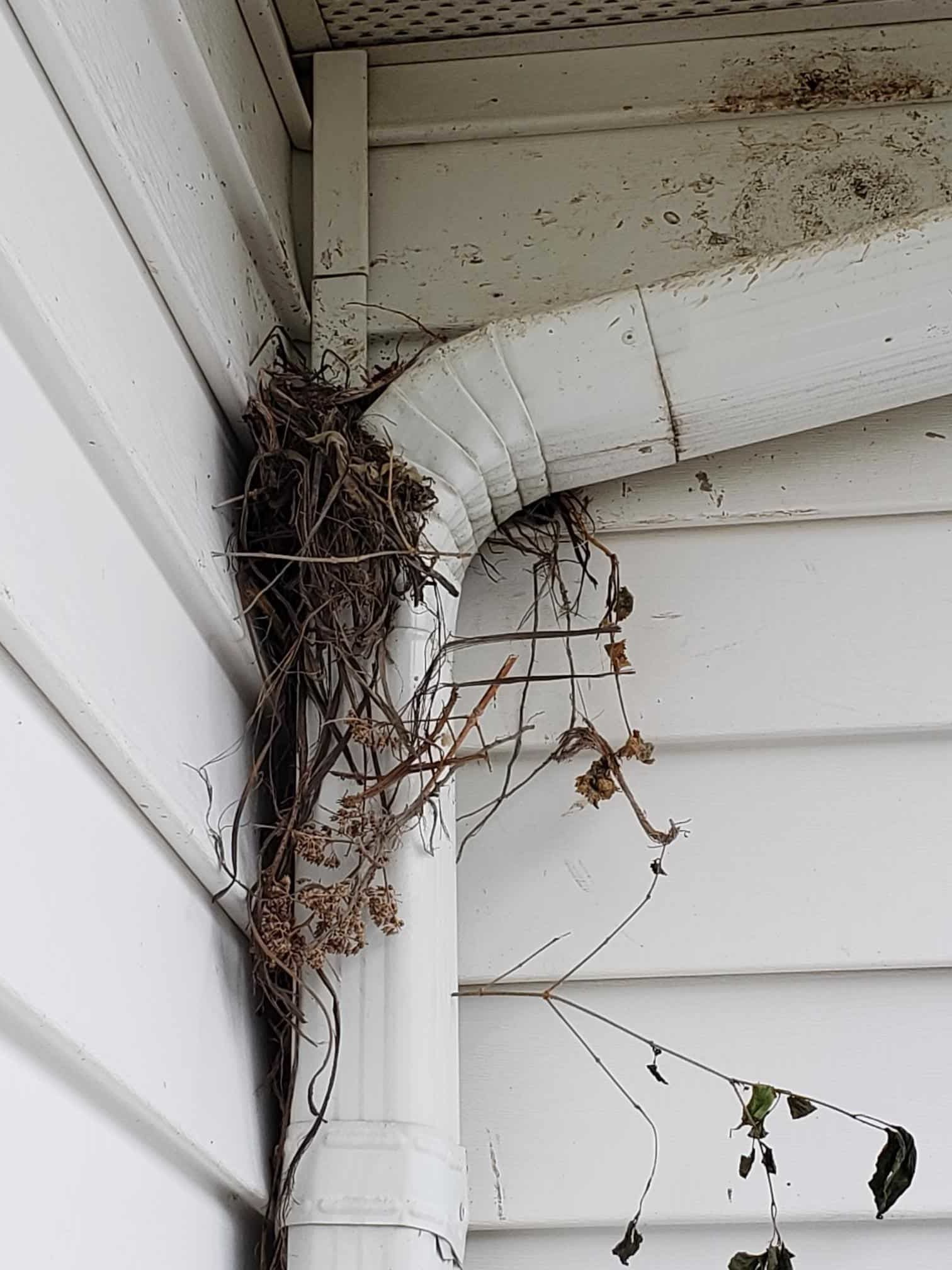 How To Keep Nests Away