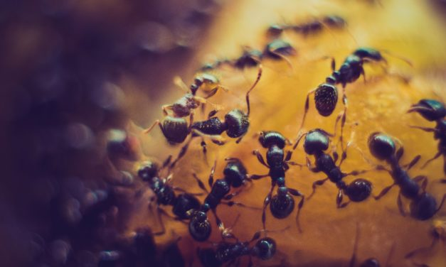 Mom Tip to get rid of those ants